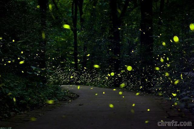 【知说】萤火虫为什么会发光?
