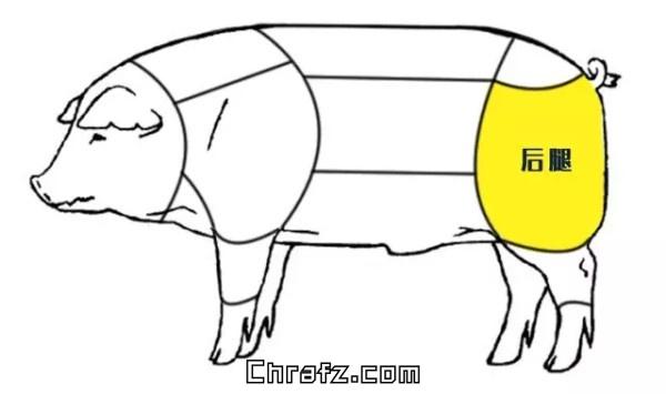 论猪哪个部位的肉最好吃?-知说